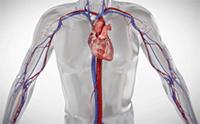 Animation video screenshot of heart pumping blood